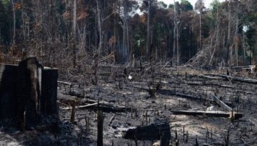 AmazôniaDesmatamento