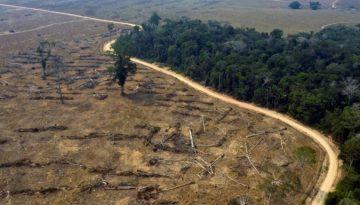 Desmatamento1