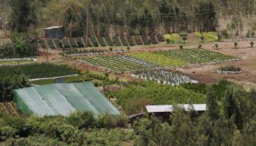 EtiópiaAgro