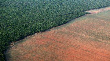 floresta-amazonica-margeada-por-terreno-desmatado-para-plantio-de-soja-no-mt-01072019164135379